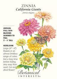 botanical sts 7 best botanical interests zinnia images on zinnias