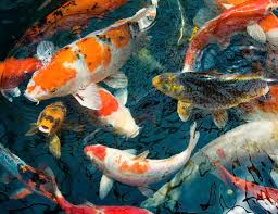 using fish as feng shui cures for wealth