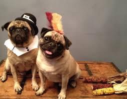 Thanksgiving Pilgrims And Indians Diy Pilgrim And Indian Dog Costumes U2013 Alana Jones Mann