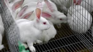 bunnies for easter think before buying your child a rabbit or baby for