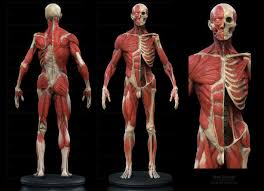 Female Body Reference For 3d Modelling 68 Best Anatomy For Artists Whole Body Images On Pinterest