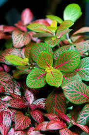 Our Favorite Plants How To by 165 Best Houseplants With Beautiful Leaves Images On Pinterest