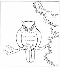 birds coloring pages pitara kids network