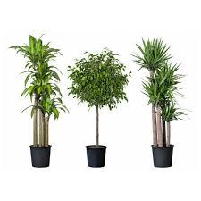 planter for smaller plants modern outdoor potted plant pot tropisk