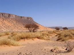 9 interesting sahara desert facts conservation institute