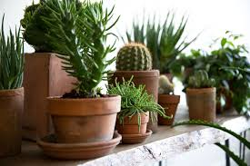 houseplants a field guide to planting care and design on gardenista