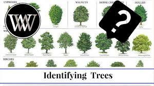 Fruit Tree Identification - how to identify a tree by leaf bark and fruit wood and lumber