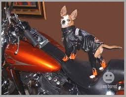 Assless Chaps Meme - image result for assless chaps dogs canines pinterest