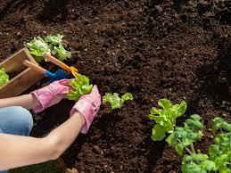 best garden soil to buy home outdoor decoration