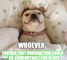 Bed Meme - dog in bed meme generator imgflip