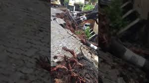 portion of zig zag road in bandra u0027s pali hill caves in youtube