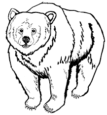 grizzly bears coloring pages within bear coloring pages