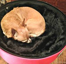 Sleepypod Mobile Pet Bed Sleepypod Mobile Pet Bed A Stylish Pet Carrier Bed U0026 Car Seat
