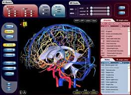 Vascular Anatomy Of The Brain New Brain Atlases Rewrite The Textbooks On Brain Anatomy A Star