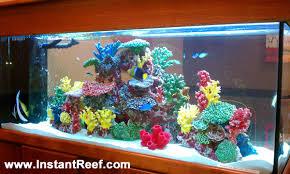 90 gallon marine fish tank with corals