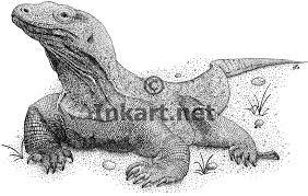 komodo dragon varanus komodoensis line art and full color