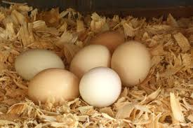 should eggs be refrigerated hgtv