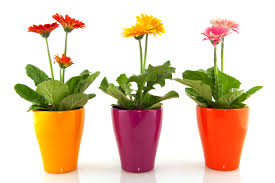potted flowers starting a garden the bh