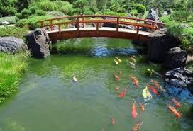 Backyard Pond Supplies by Garden Pond Supplies Virginia Discount Pond Supplies Water Garden