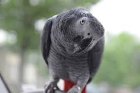 halloween background window killing owman woman gets life for murder after parrot says u0027don u0027t shoot u0027 time com