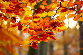 forest in autumn free image peakpx