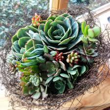 succulent bouquet succulent bouquets vertical walls garden design and landscaping