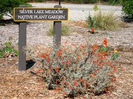 ca native plant nursery public projects theodore payne foundation