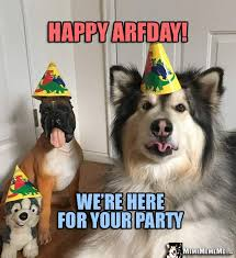 Birthday Animal Meme - 269 best funny animal birthday memes images on pinterest