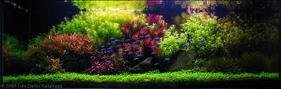 aquascaping layouts with stone and driftwood dutch aquarium aquascape a style from the 1930s aquascaping love
