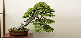 the meaning and symbolism of the word bonsai