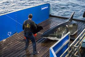 ocearch on twitter