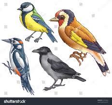 woodpecker titmouse goldfinch raven on white stock illustration
