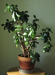 easy plants five easy care eye catchers house plants