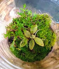 bring some spring with you how to make a sealed terrarium fly