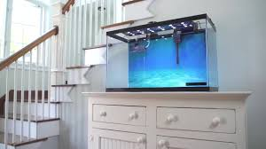 Fish Tank Desk by How To Setup A Fish Tank Marine Saltwater Pet Supplies Pet
