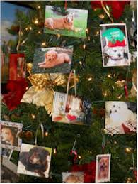 diy pet remembrance tree fundraiser