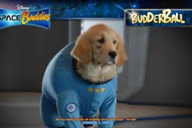 cute basket buddies wallpapers buddies wallpapers walldevil