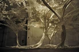 cherry trees in washington wonderfulvinyl