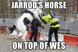 Garda Memes - jarrod s horse on top of wes garda horse dick meme generator