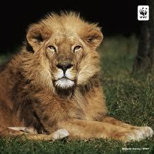 wildlife fund twitter