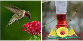 red dye nectar might be killing hummingbirds red dye nectar