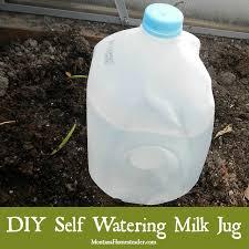 How To Make Self Watering Planters by Diy Self Watering Milk Jug Montana Homesteader