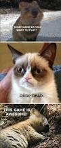 Live Laugh Love Meme 1164 Best I Love Grumpy Cat Images On Pinterest Grumpy Kitty