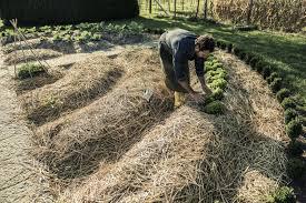 creative of mulch vegetable garden beginners guide to mulching