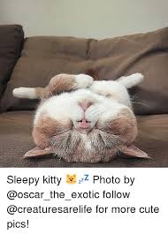 Sleepy Kitty Meme - 25 best memes about sleepy kitty sleepy kitty memes