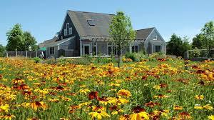 native plants of the northeast northeast wildflower seeds american meadows