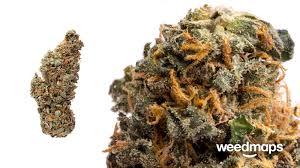 Colorado Marijuana Dispensary Map by Medical Marijuana Colorado Springs U2013 Pain Management Solutions