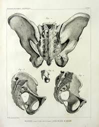 Human Jaw Bone Anatomy Anatomie De Bones Vintage 1831 Curiuos Impression De Gravure Du