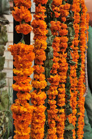 Flower Garland For Indian Wedding Free Images Leaf Floral Food Produce Color Autumn Yellow