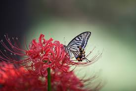 butterfly flowers swallowtail butterfly images pixabay free pictures